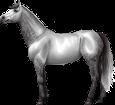 Holsteiner - manto 295