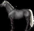 Holsteiner - manto 71