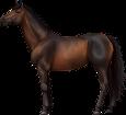 Holsteiner - manto 76