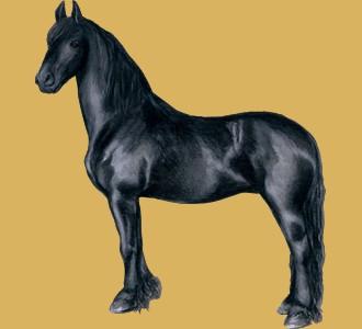 Acoger a un caballo de raza frisón