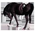Appaloosa - manto 1000000125