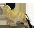 Caballo de Noruega - manto 1000000122