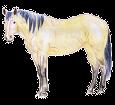 Mustang - manto 1000000154