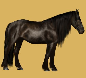 Mustang - manto 26