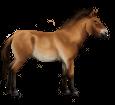 Caballo de Przewalski - manto 20