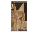 Haflinger - manto 140