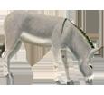 Burro gris - manto 52