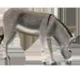 Burro gris adulto - manto 71